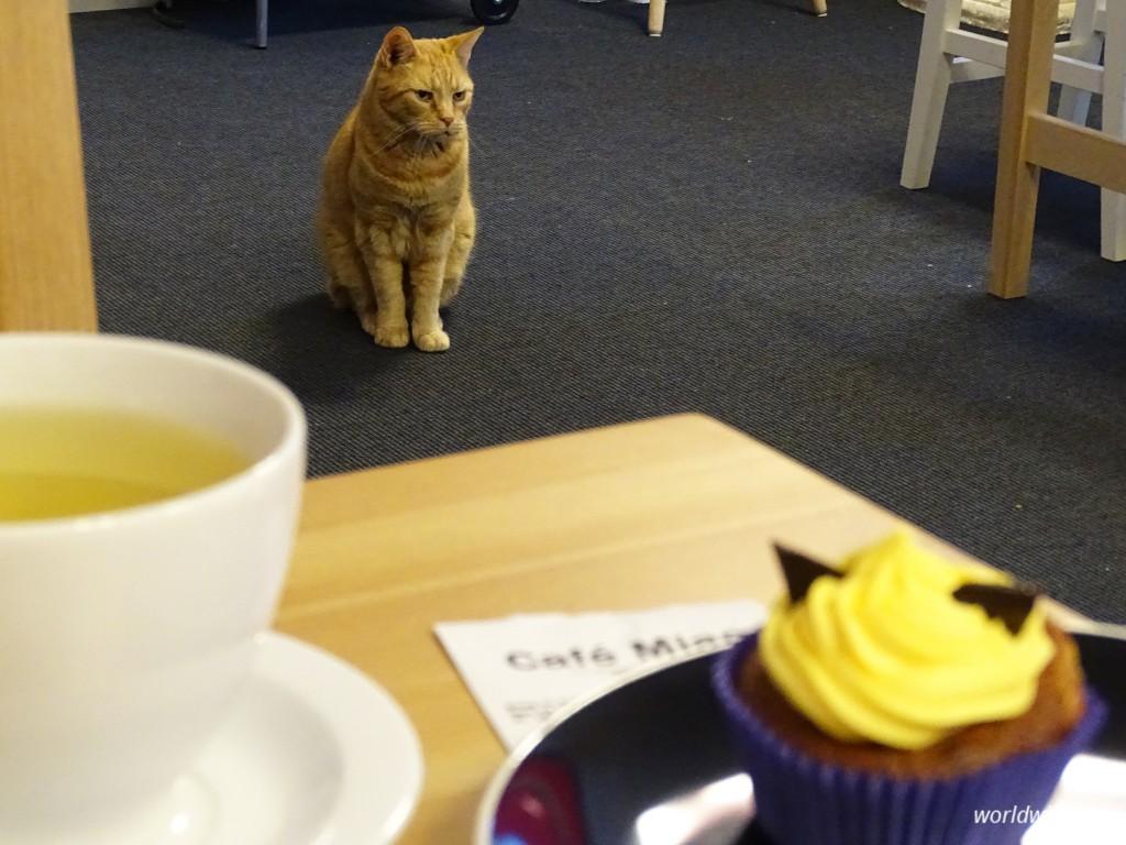Kattencafé Kopenhagen