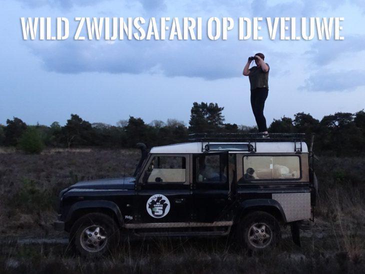 wild zwijnsafari veluwe staatsbosbeheer