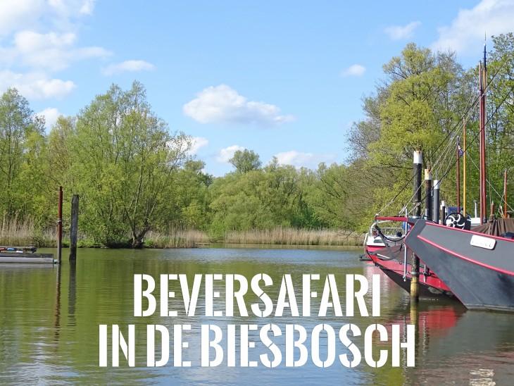 beversafari biesbosch