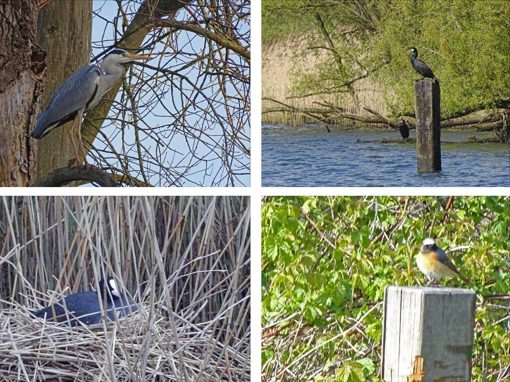 vogels biesbosch