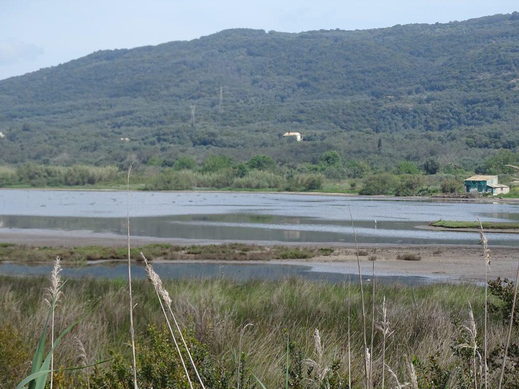 flamingos Corfu