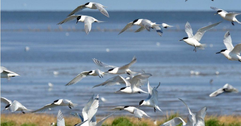 vogels waddenzee