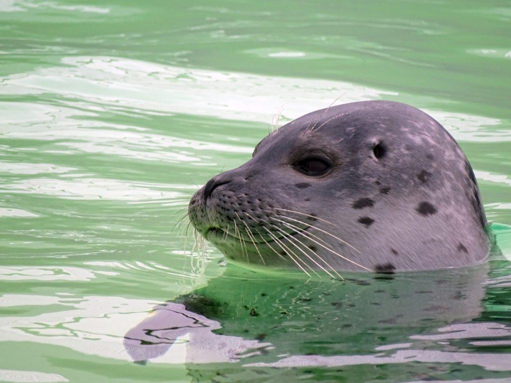 zeehonden waddenzee