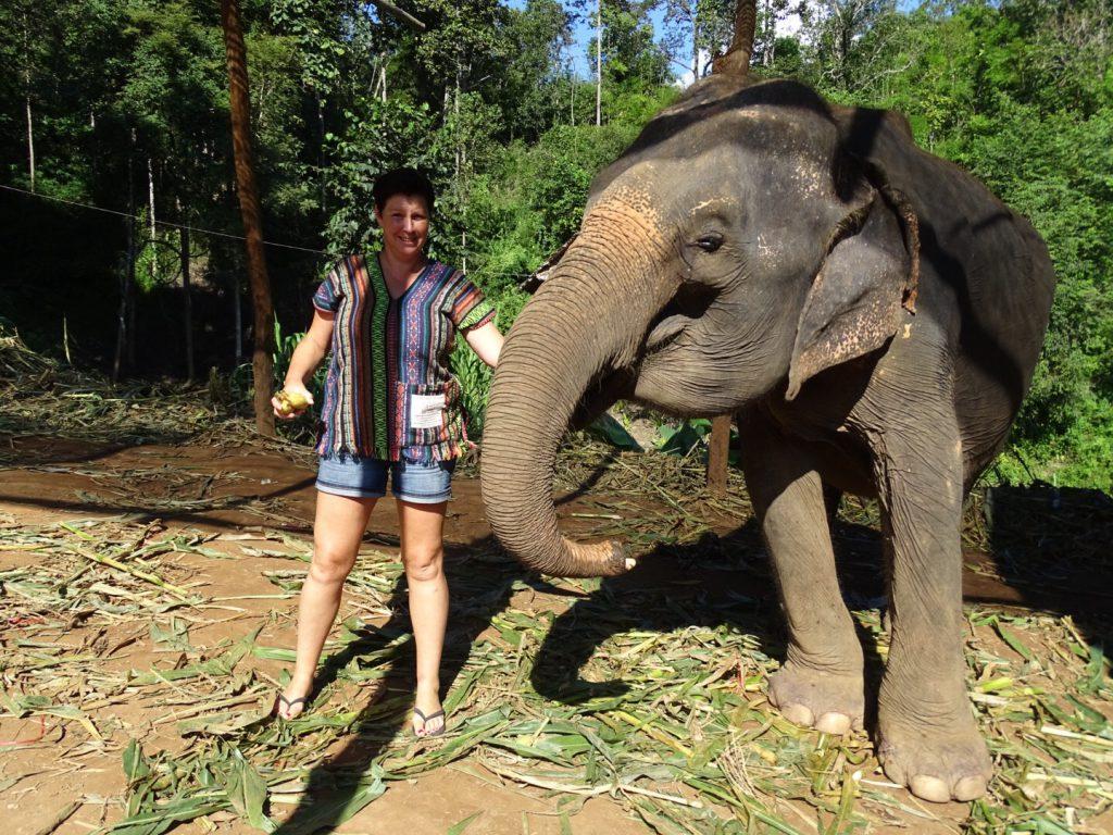 olifanten verzorgen thailand