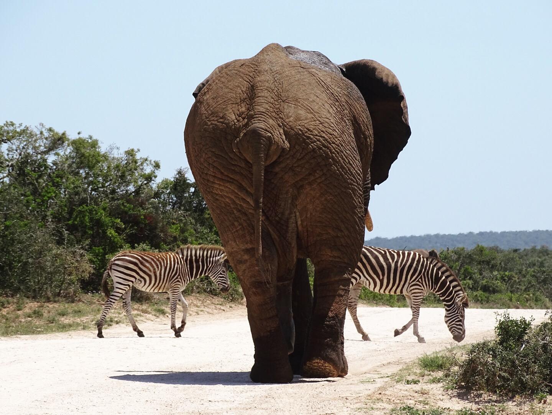 tips addo elephant park