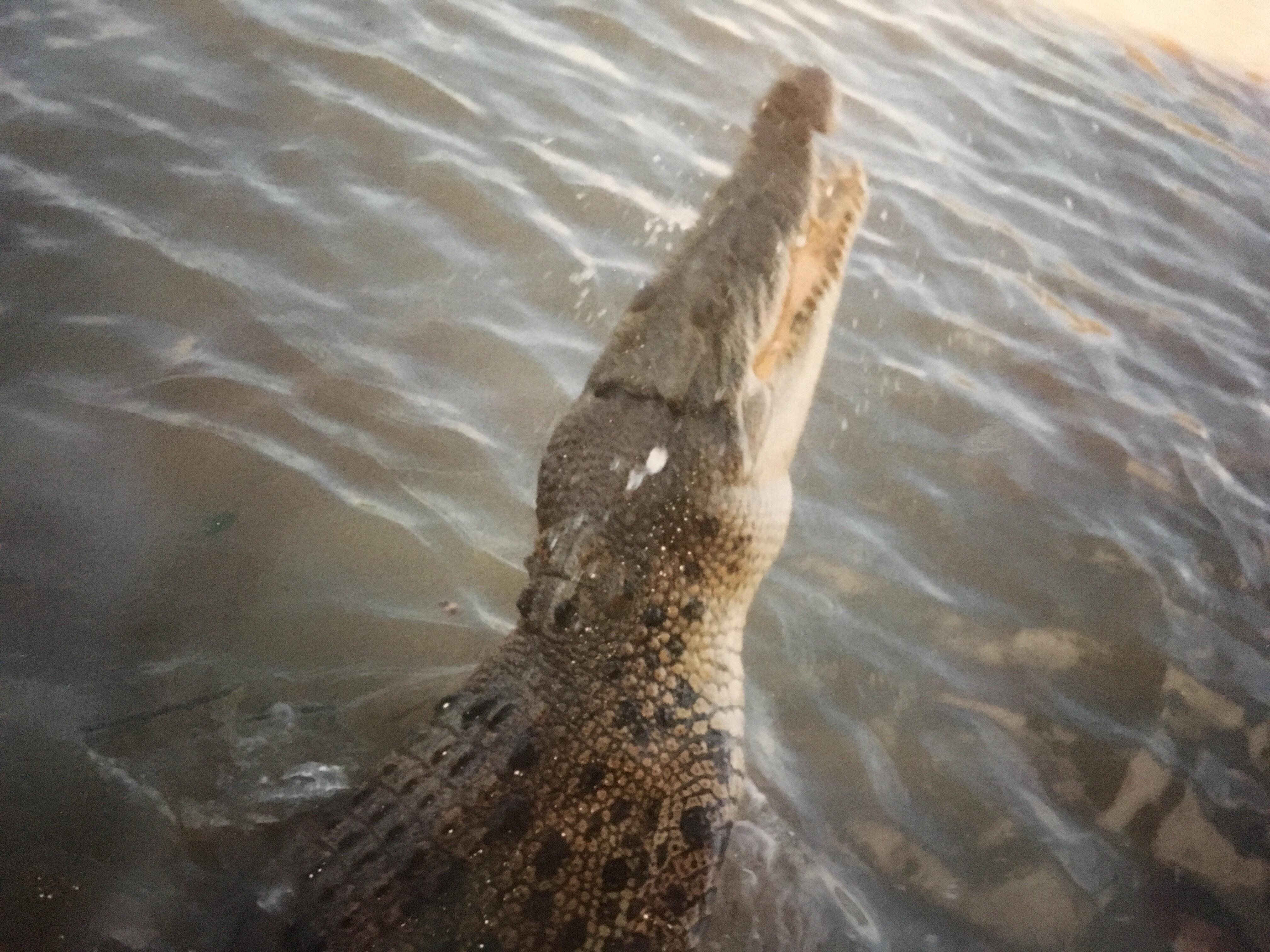 krokodil adelaide river