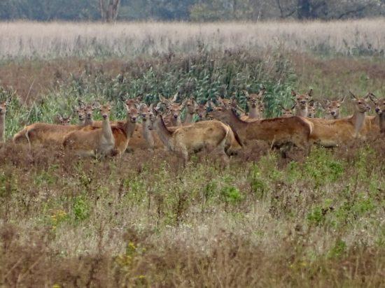 Ga op zoek naar de Grote Vijf van Nederland met Staatsbosbeheer - www.worldwife.nl #edelhertsafari #oostvaardersplassen
