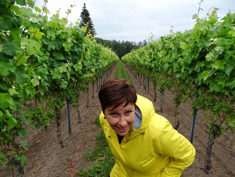 wijngaard achterhoek