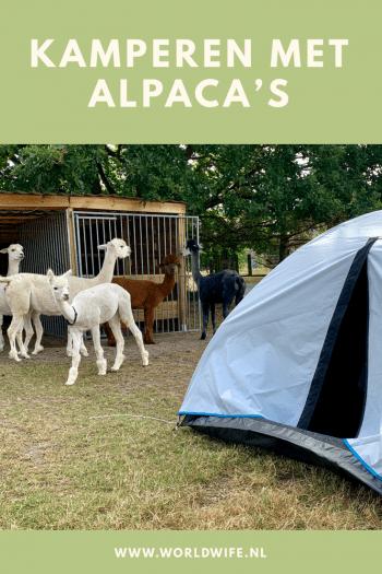 Kamperen en knuffelen met alpaca's in Haacht, België #campspace