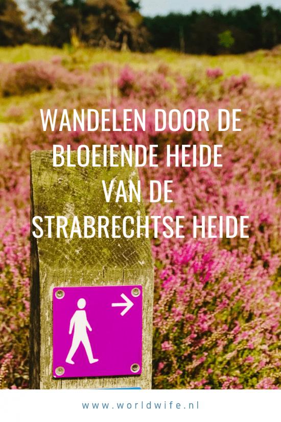 Wandelen door de bloeiende heide van de Strabrechtse Heide in Noord-Brabant, Nederland