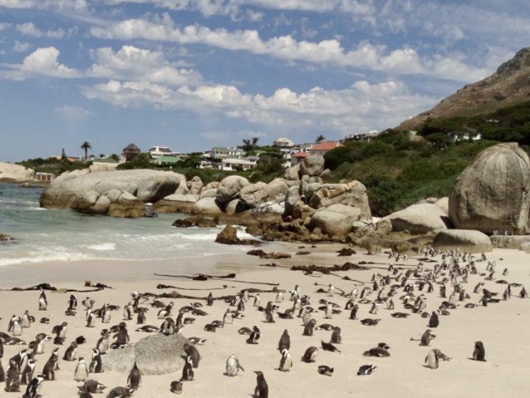 Boulders Beach, Kaapstad, Kaaps Schiereiland, Zuid-Afrika